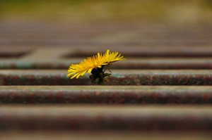 (Photo: mendhak /Flickr)