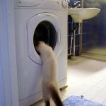 Cat washing machine_opt
