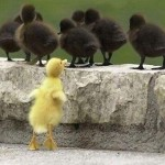 Duckling feeling left out